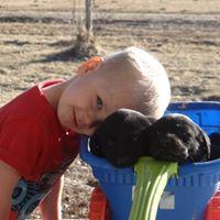 Kid Friendly Nebraska Labrador Retriever Puppies for sale in Nebraska